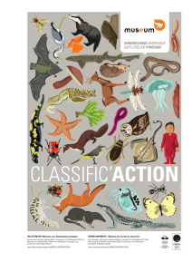classific`action - Royal Belgian Institute of Natural Sciences