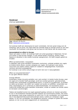`Huiskraai (Corvus splendens)` PDF document | 4 pagina`s