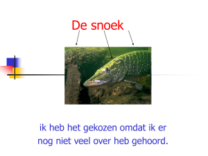 De snoek - Bloggen.be