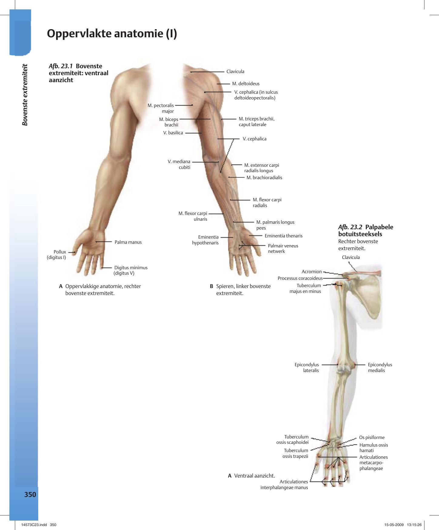 Großartig Lungenatemweg Anatomie Fotos - Anatomie Ideen - finotti.info