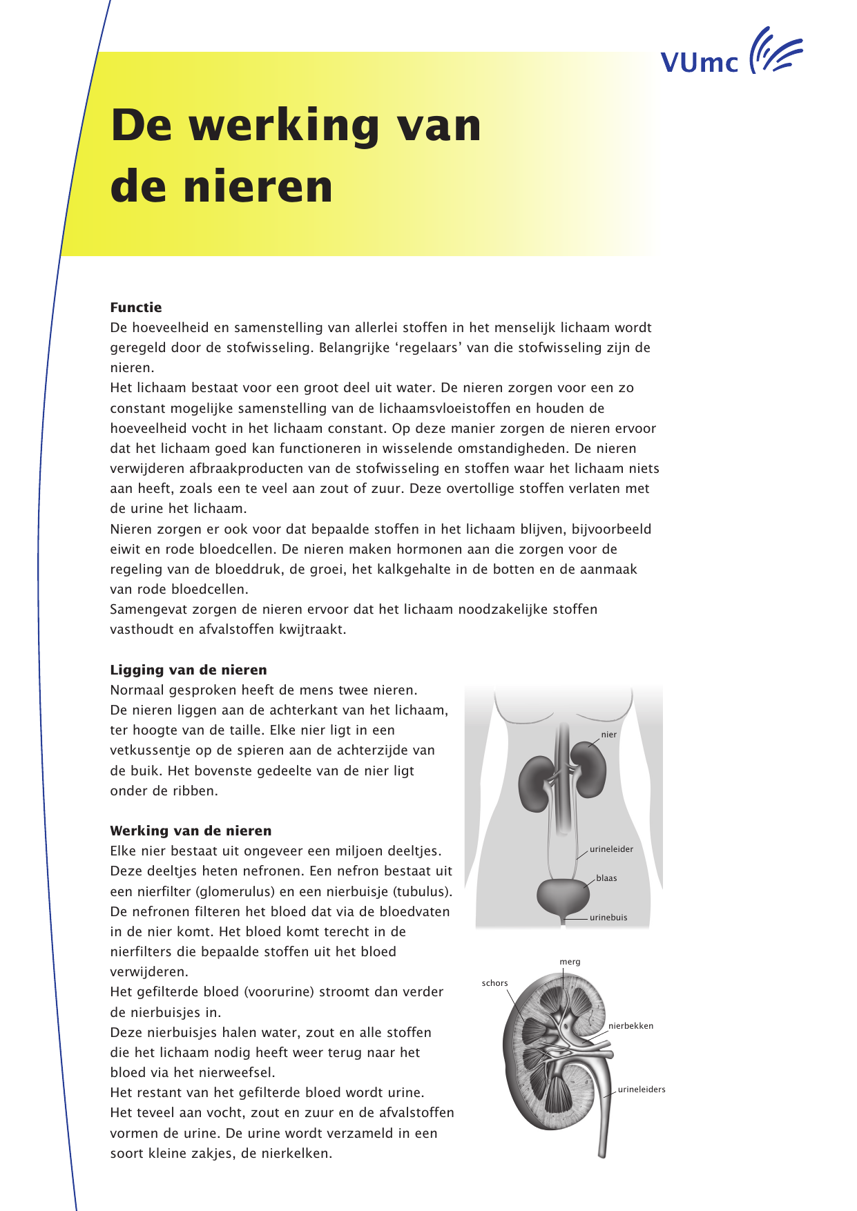 De werking van de nieren