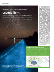 Levend licht - Danny Haelewaters