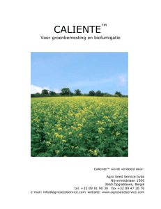Caliente Mosterd - Agro Seed Service