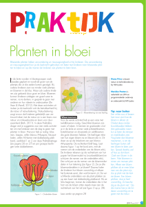 Planten in bloei