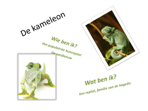 kameleon - Bloggen.be