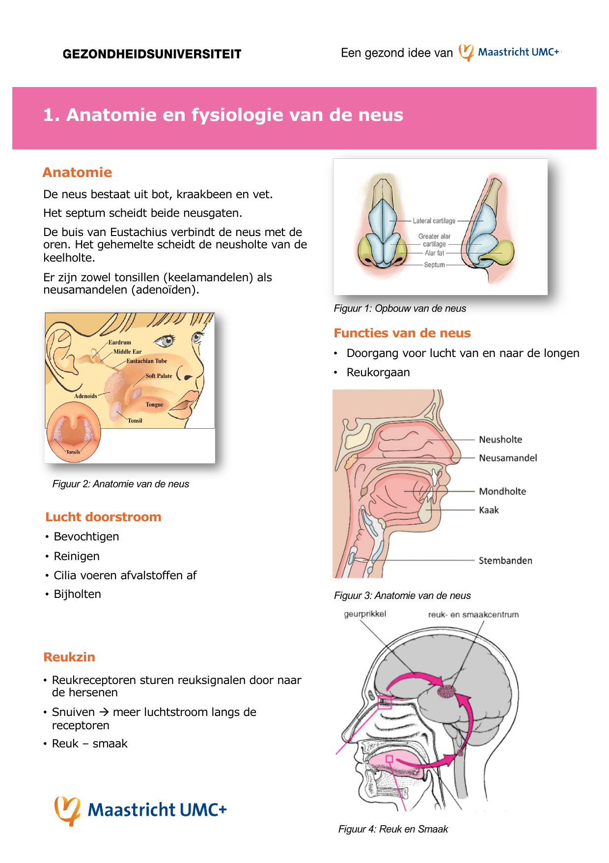 anatomie neus uitwendig
