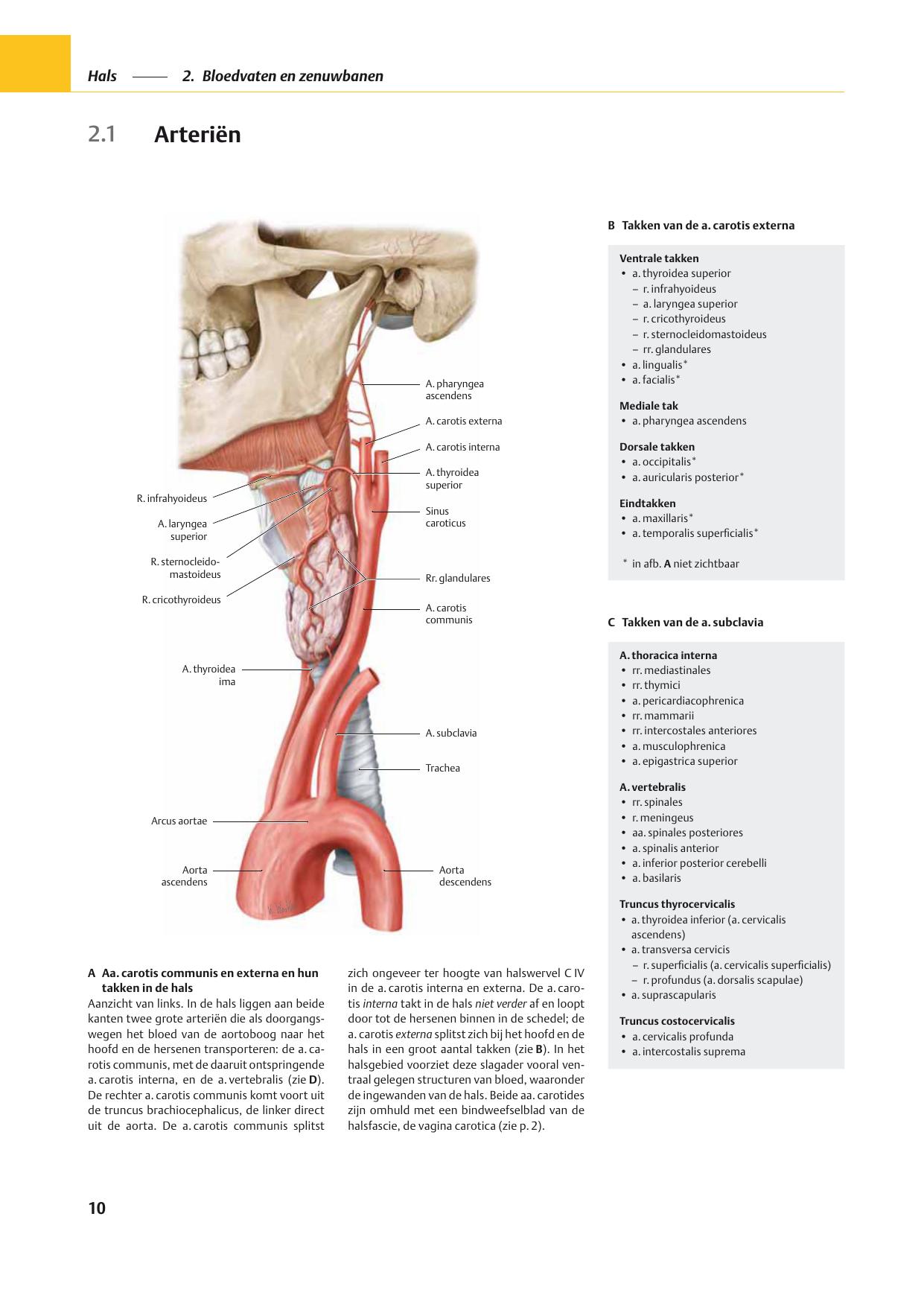 Arteriën